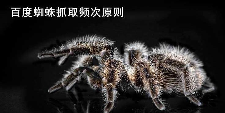 【怎么写好文章】蜘蛛爬取频率低怎么解决?这些措施有效提升蜘蛛频率